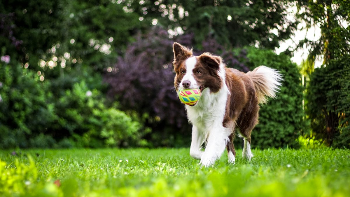 Best Grass for Dogs 2021 – Our Top 5 Picks + Guide